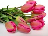 Fotografie Tulips