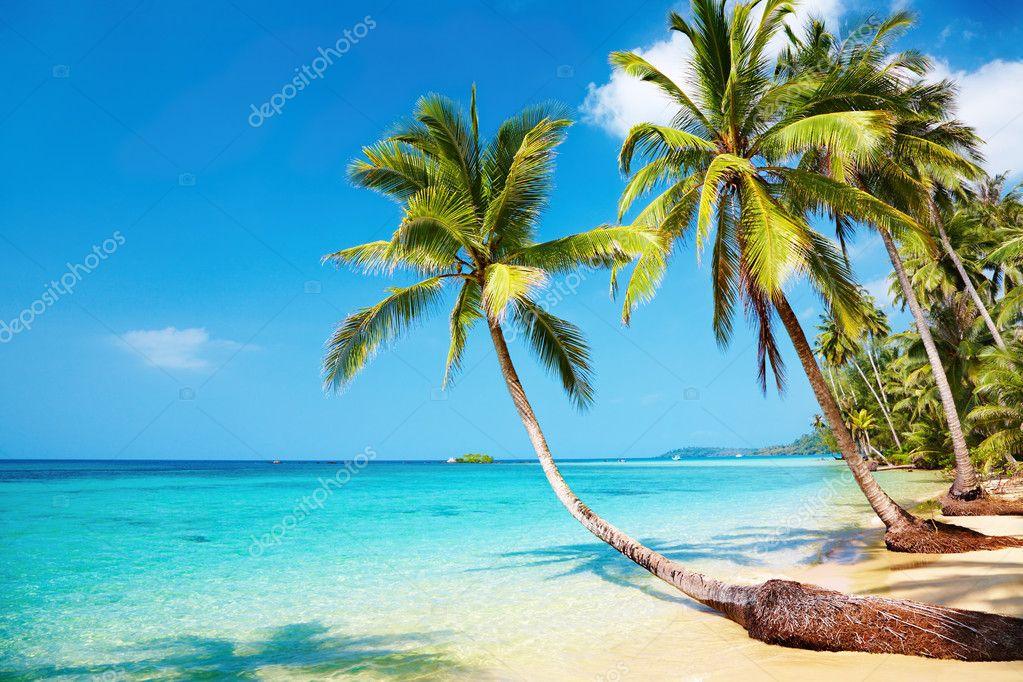 Фотообои Тропический пляж