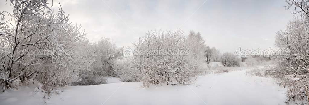 Snow landscape with frosted trees