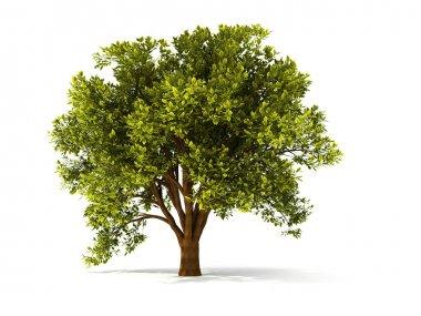 3d summer tree