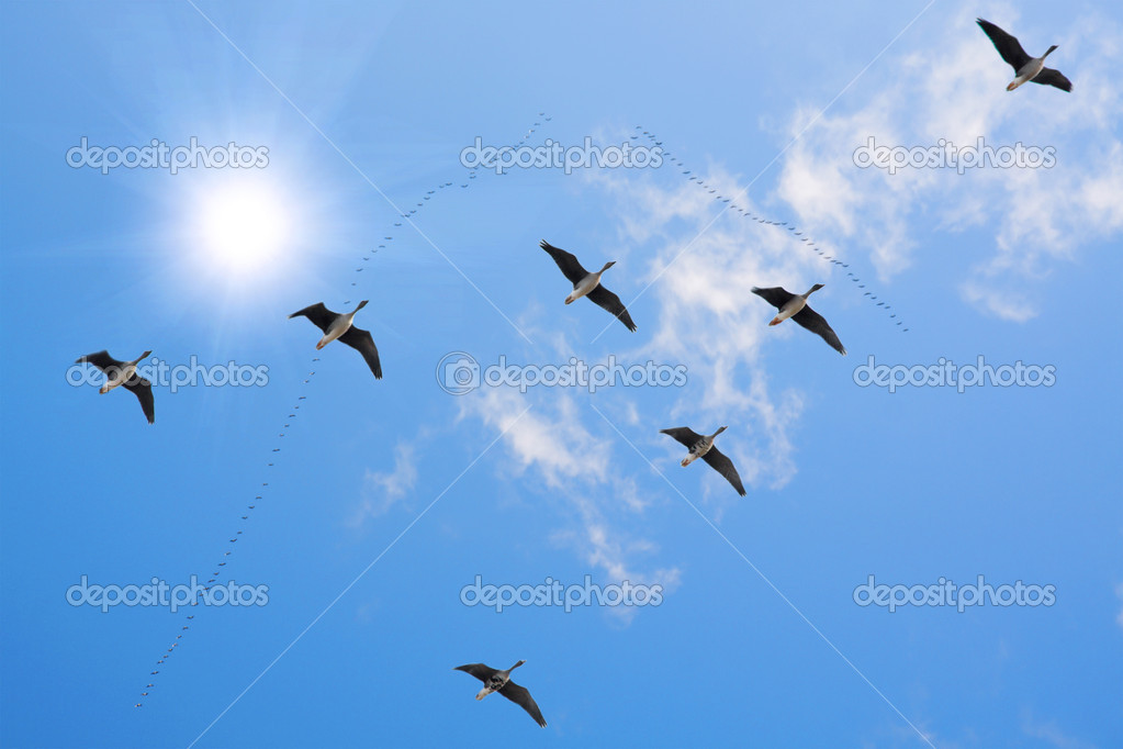 Flock of migrating