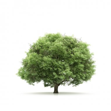 Tree isolated on a white background stock vector
