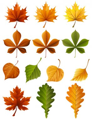 Vector illustration - autumn leaves icon set clip art vector