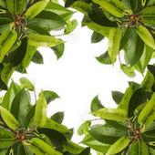 Green plant leaf background
