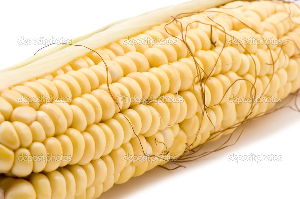 Corn in cob closeup