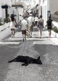 Obdachloser Hund auf der Straße