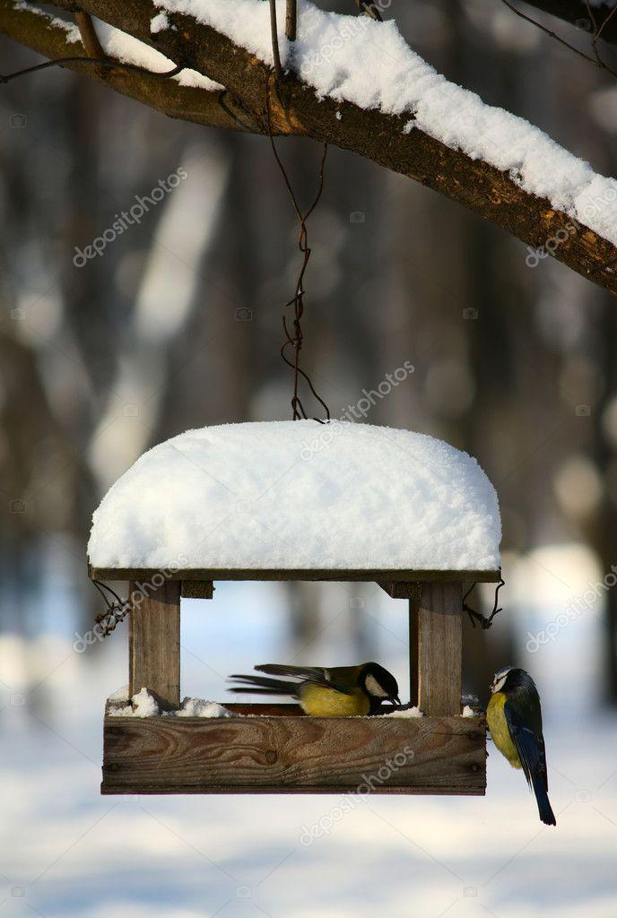 Titmouses near the feeder