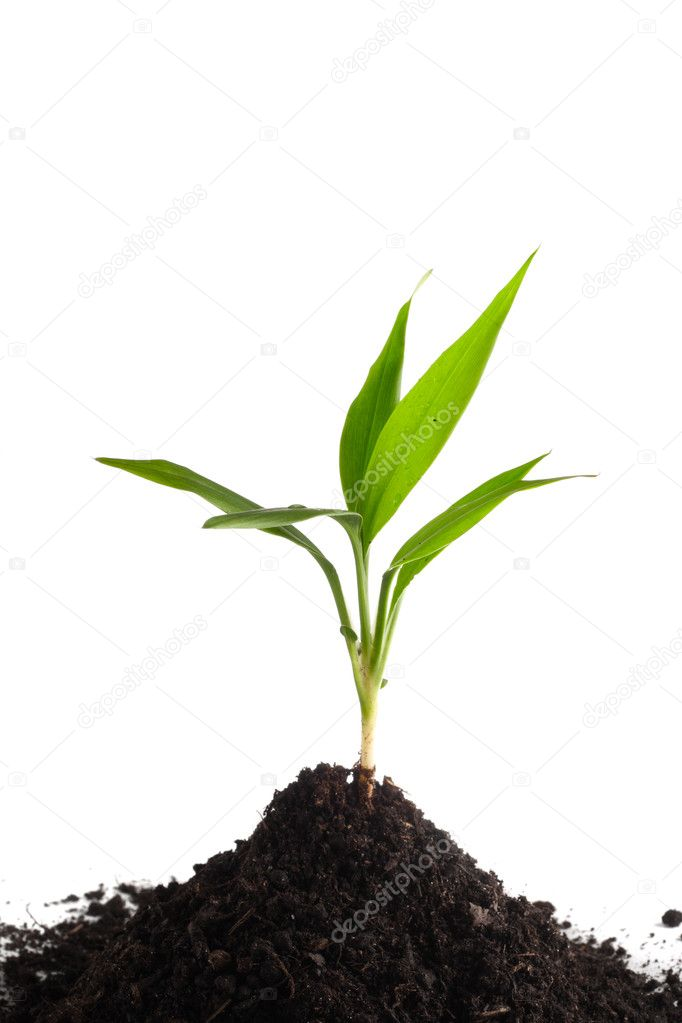 Little green sprout in a soil