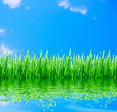 Green grass wth blue sky