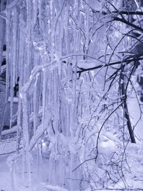 Winter. Trees in ice are frozen Very bea