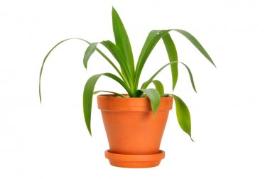 Young green plant in a pot isolated on white stock vector