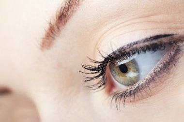 Close-up photo of green human eye stock vector