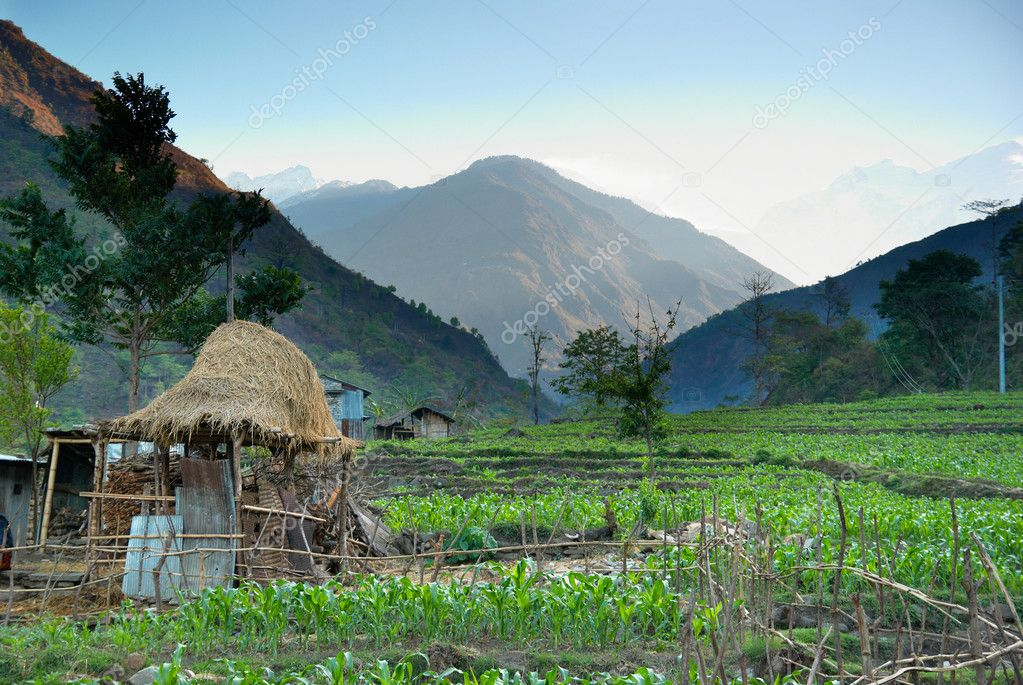 Rice fields in the himalayan hills