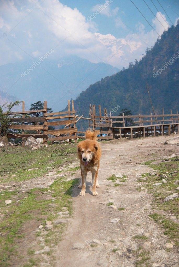 The dog and Tibetan village