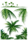 Tropical_leaf1