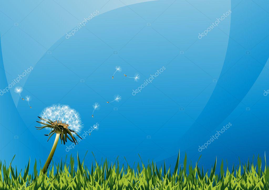 Dandelions on summer field