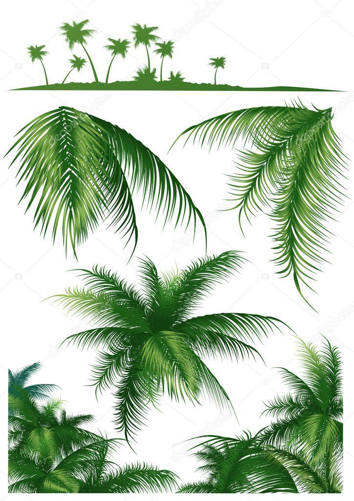Tropical_leaf1