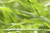 Fényképek zöld fű