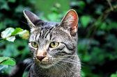 Fotografia gatto