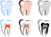 Medizinische Dental-Symbole, Zahnschema