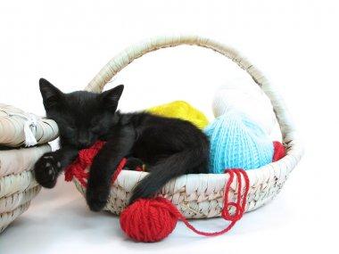 Kitty sleeping in the basket with yarn
