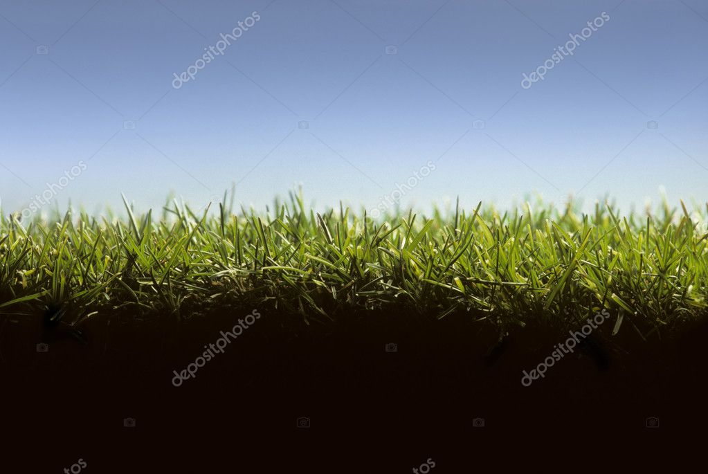 Cross section of lawn at ground level