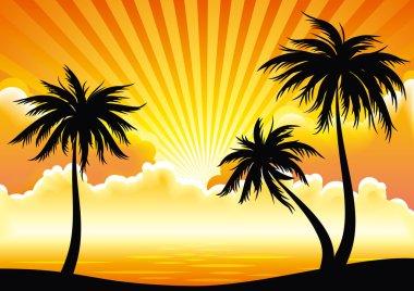 Vector sunset coastline