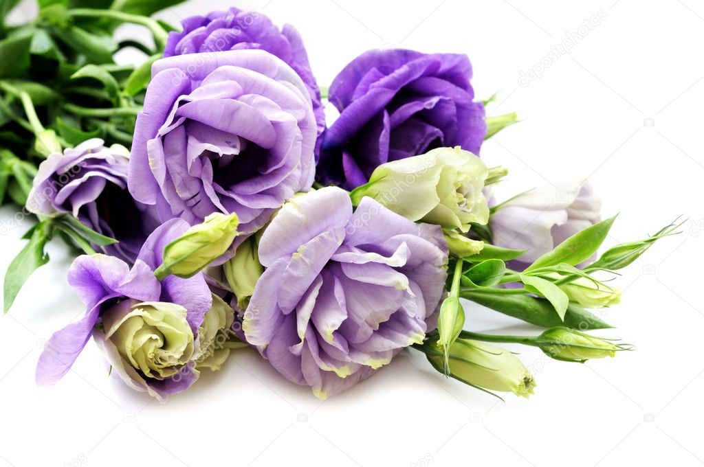 Blue campanula flowers bouquet