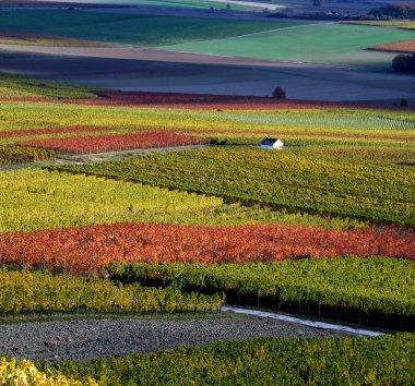 Vineyard, The Rhine Valley, Germany
