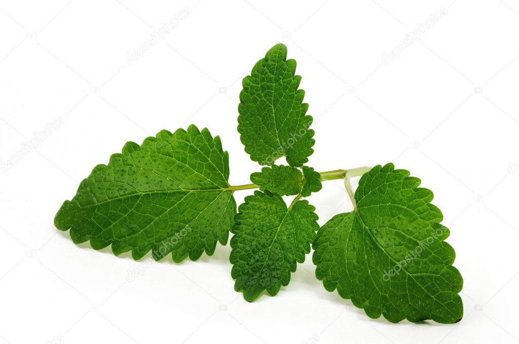 Lemon-balm mint