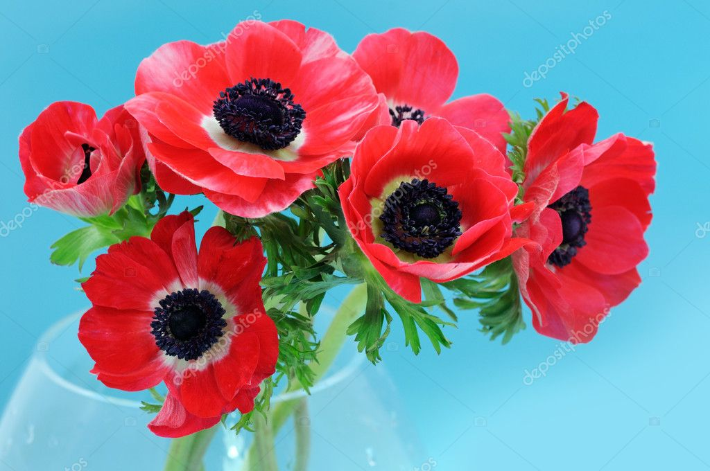 Anemone bouquet on blue background
