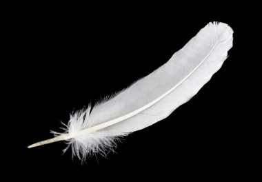 Big white feather