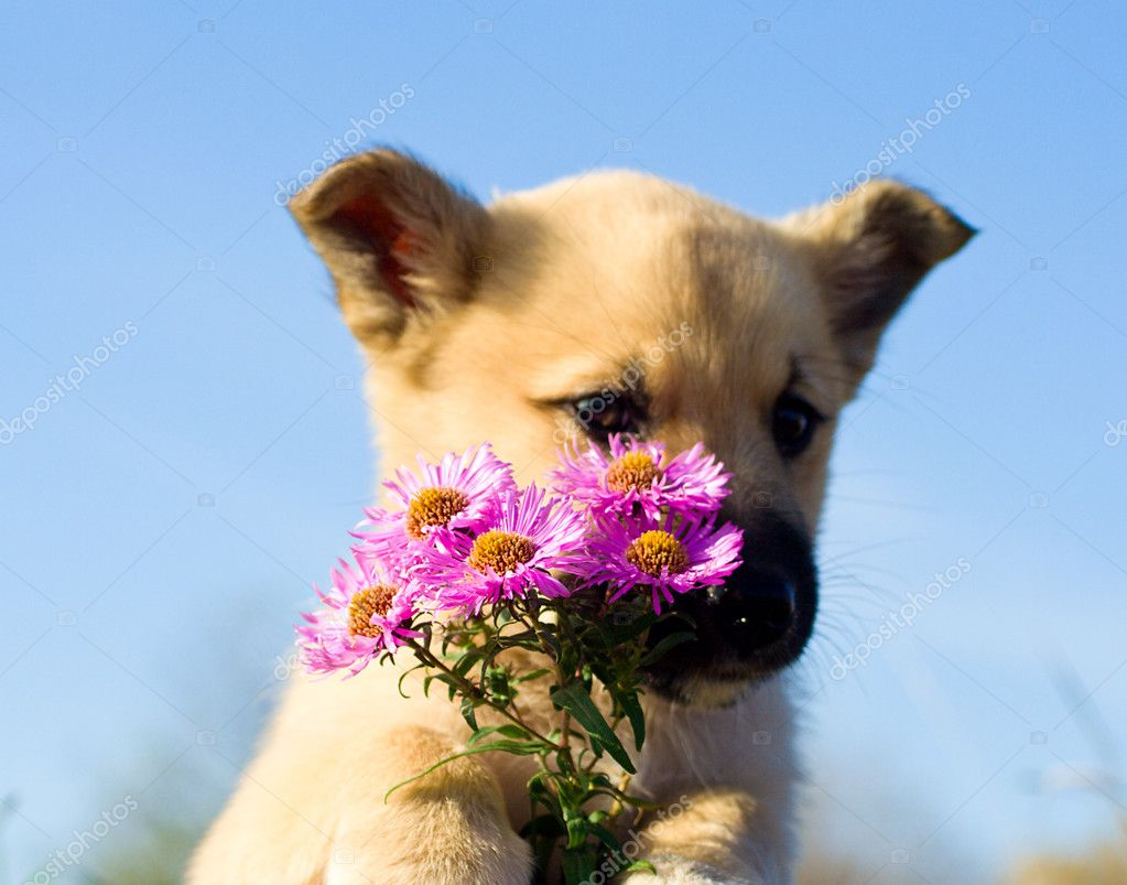 Puppy dog hold bouquet of flowers