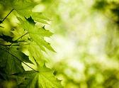 foglie verdi