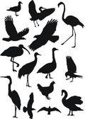 sbírku ptáků