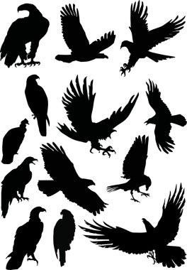 Thirteen eagle silhouettes