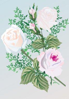 Three white rose flowers