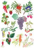 Fényképek Gyümölcsök és virágok fehér