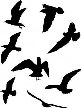 Gull silhouette collection