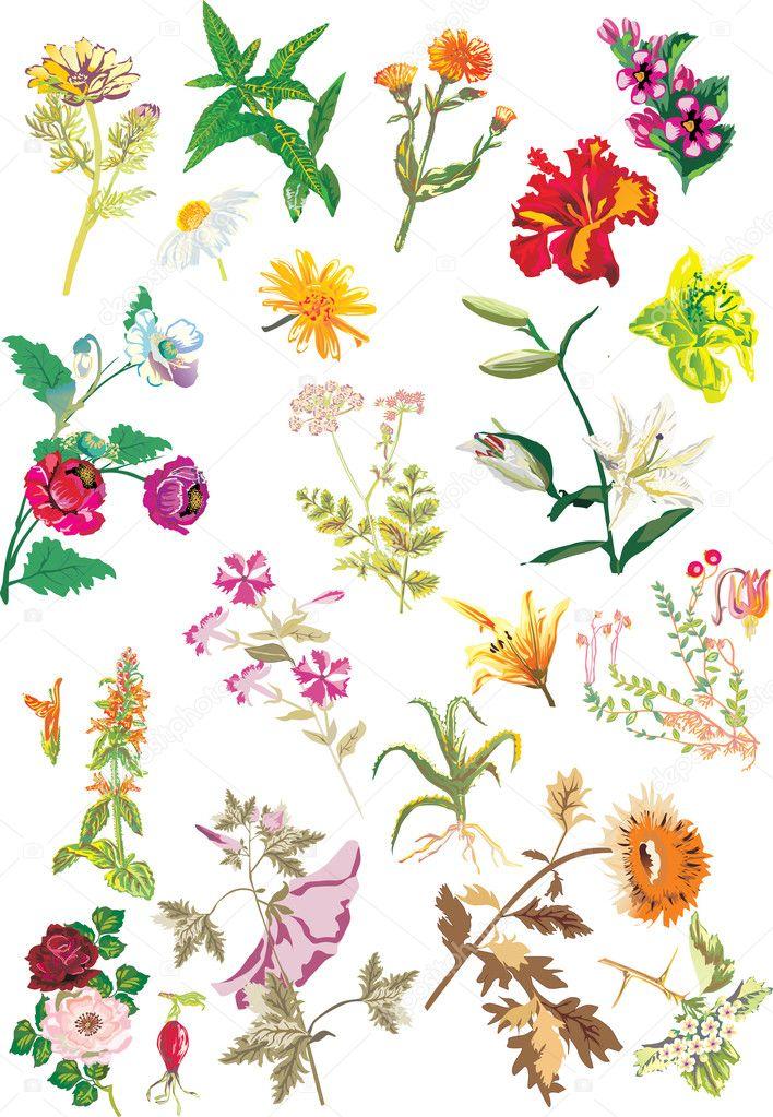 Different flowers set