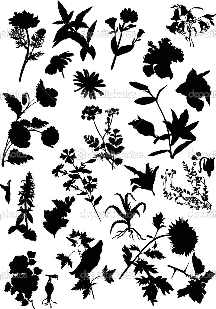 Цветы силуэт