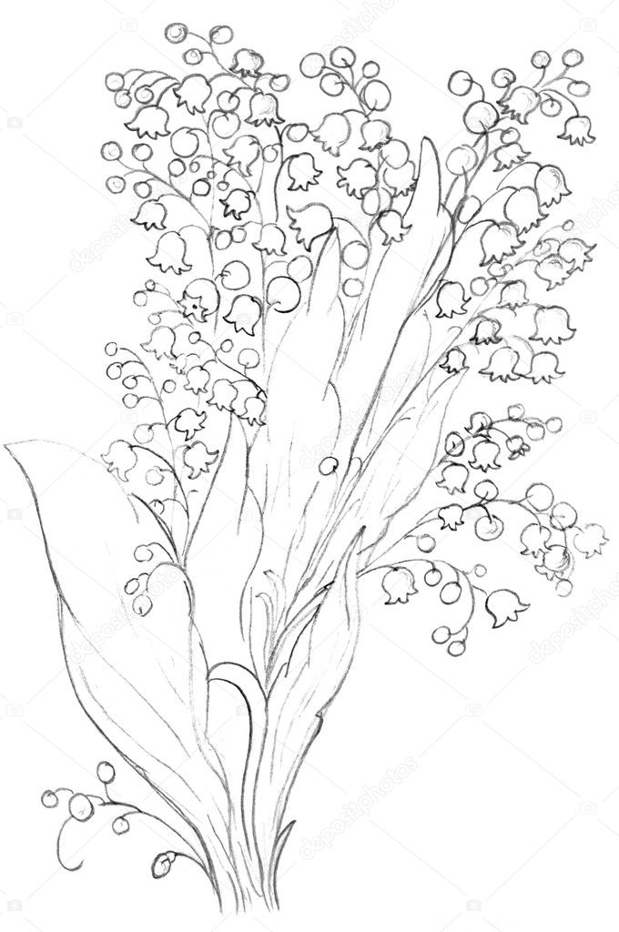Pictures A Flower To Draw Lily Flowers Sketch Drawing Stock Photo C Nadyaus 2084719