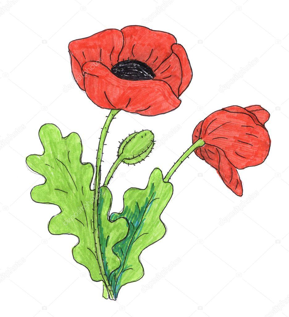 poppy flower drawing stock photo nadyaus 2109754