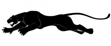 Dark wild cat
