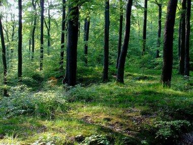 Forest on Pomerania, Poland