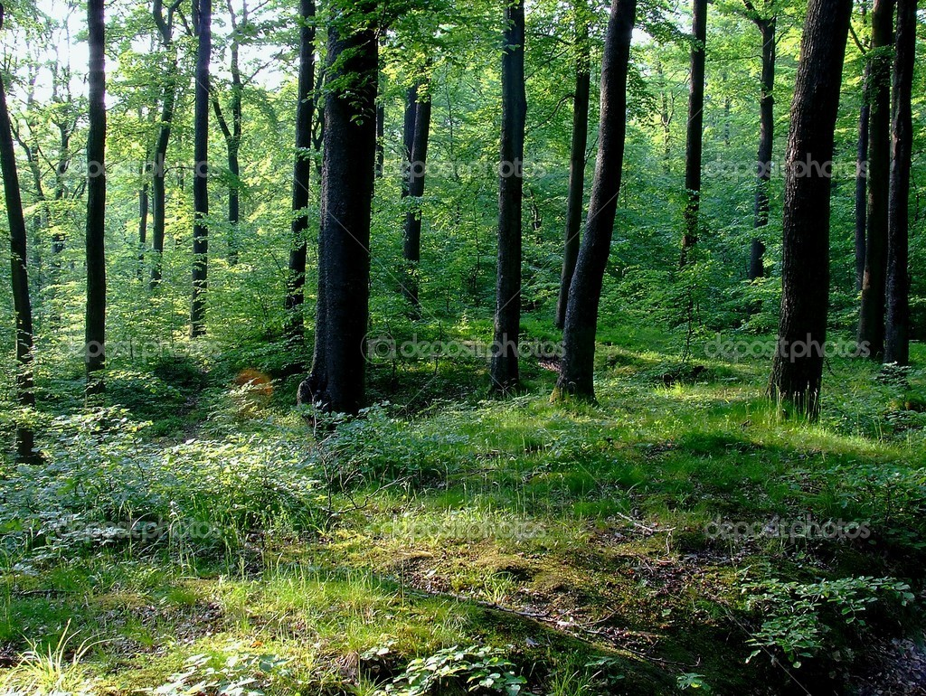 Фотообои Forest on Pomerania, Poland