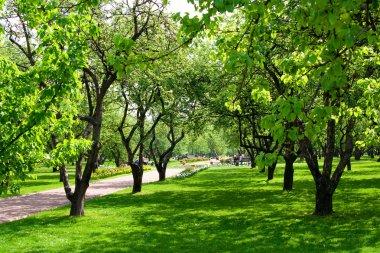 Apple spring garden stock vector