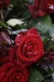 červená růže kytice ve sněhu