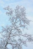 albero dinverno