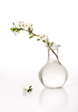 Vase with a cherry branch